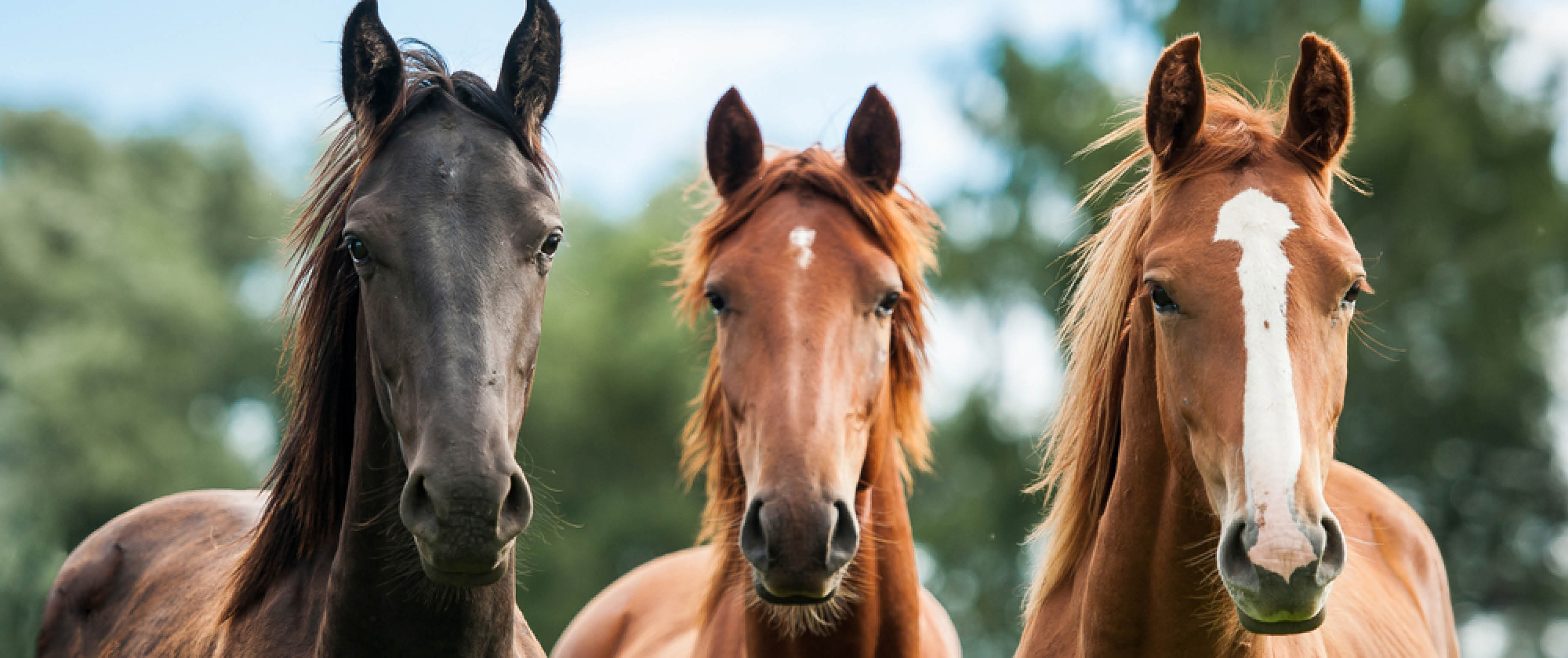 A complete range of horse bedding to suit your needs