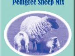 Badminton Pedigree Sheep Mix