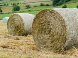 Std Round Bale Hay