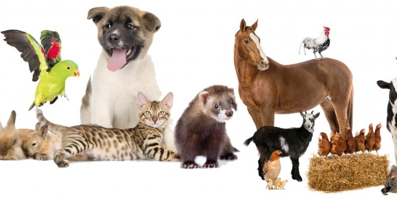 Come and visit our animal feed store for all your pets needs
